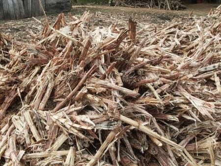sugarcane bagasse for making briquettes